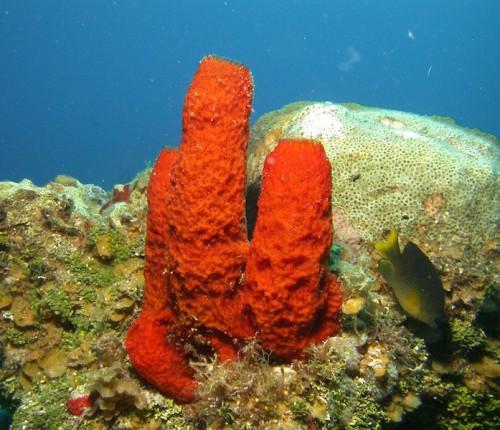 губки в лекции фонда династия Sponge-1