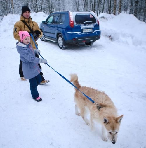 Заветное слово «гулять!»Что может быть лучше для собаки, чем прогулка! Гости могли не только посмотреть на животных, угостить чем-нибудь вкусненьким, но и погулять с ними.