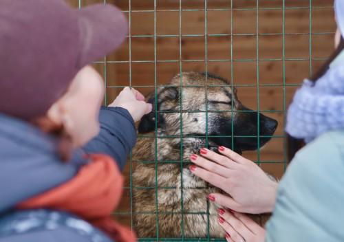Собачья радость Собакам, которые оказались в приюте, так не хватает человеческой заботы и тепла.