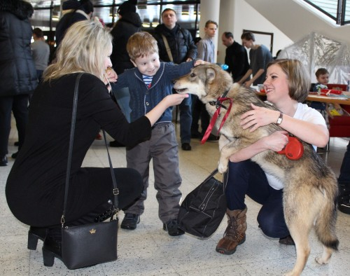 Давайте знакомиться Животные из приюта стали главными звездами праздника! В приюте нет штатных сотрудников – все, кто приходит ухаживать за собаками делают это по зову сердца.